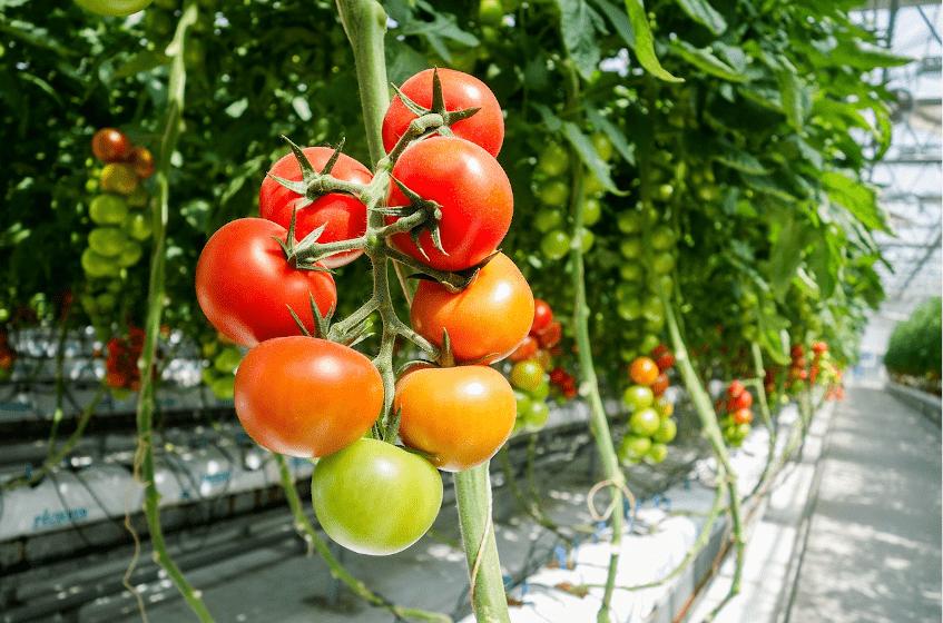 Grootste tuinbouwbedrijf in Oekraïne