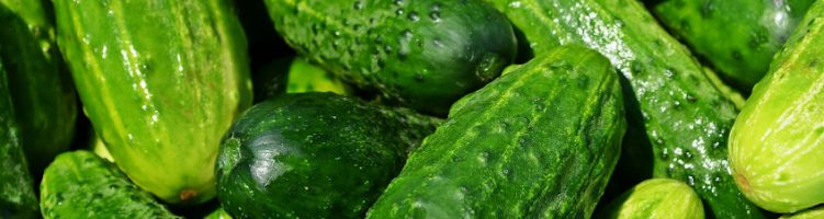 [angielski] German Sercom user develops cucumber beer