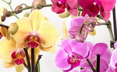 Stolk Flora teelt zonder chemie