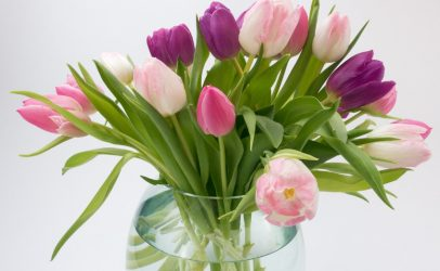 Tulpen Black Label hebben langste vaasleven