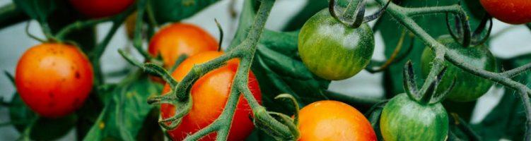 Sercom eindgebruiker Scherzer Gemüse